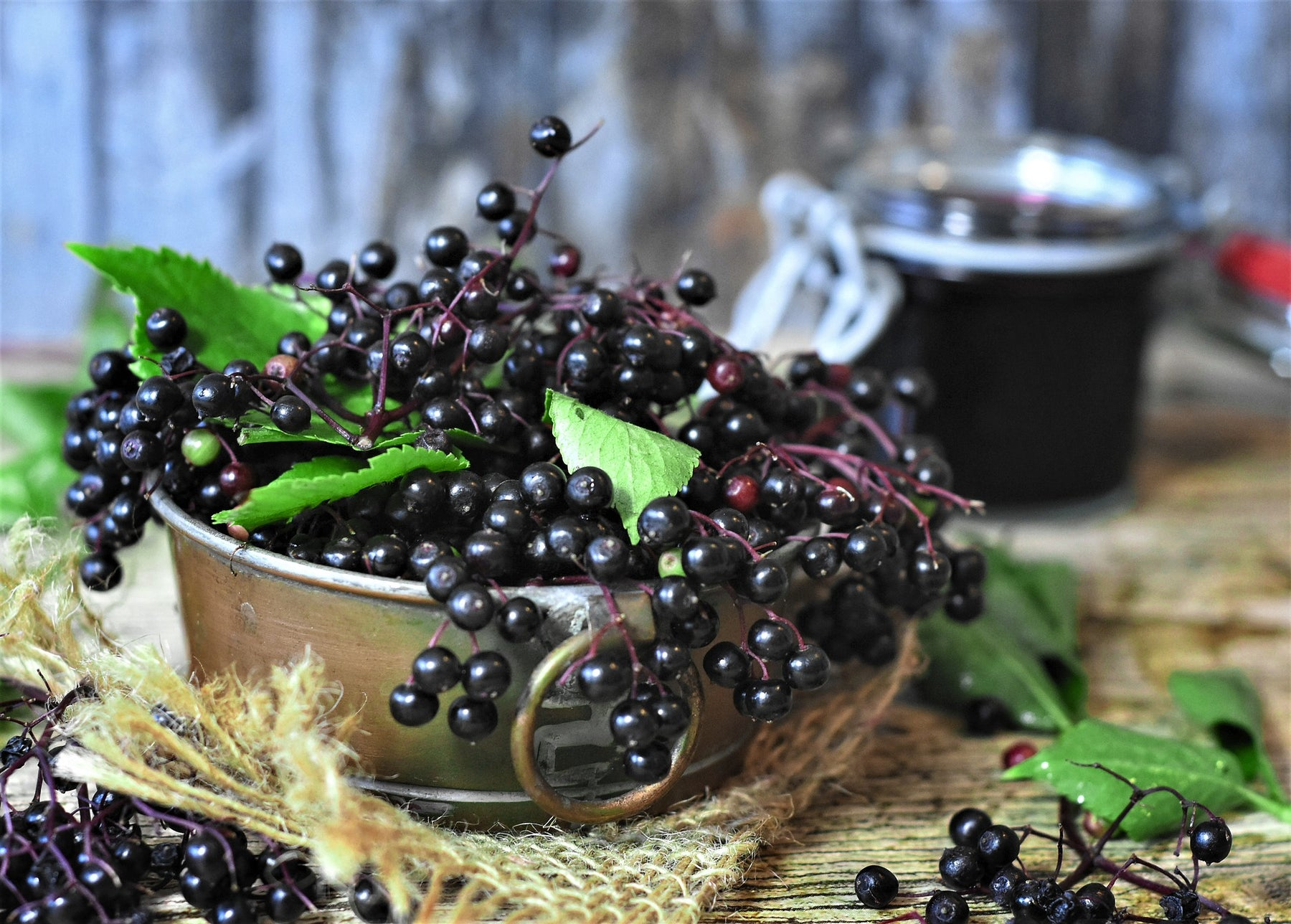 Elderberries: Nature's Remedy for the Flu