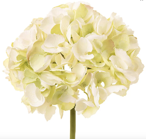 English Hydrangea Stem - White