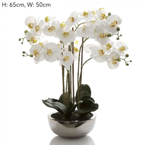 Phalaenopsis Orchid in Silver Pot - 65cm - White