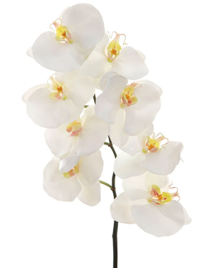 Orchid Spray - White