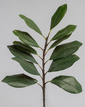 Magnolia Leaf Stems - Green - Set/3