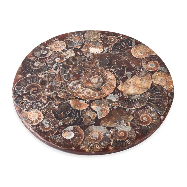 Polished Madagascar Fossil Ammonite Plate with Stand Gemstone Collectors U.S.
