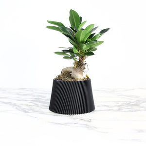 Matte Black Planter ° LYNA °
