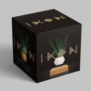 box levitating plant home decor planter gift