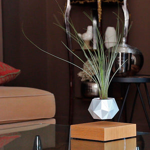 tillandsia zen pure levitate gift idea for plant planter levitation fly