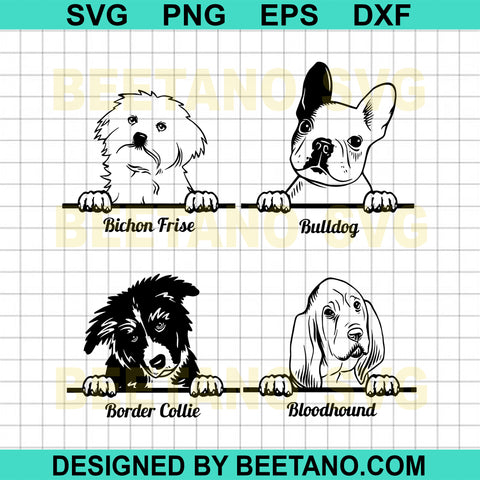 Bulldog Bichon Frise Border Collie Bloodhound Dog
