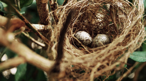 How do birds mate, nest & rear chicks?