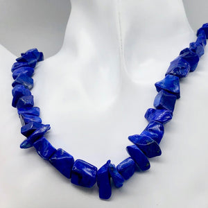 Intense! Natural Gem Quality Lapis Lazuli Bead Strand!| 46 beads | 11x10x6mm |