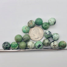 "Load image into Gallery viewer, Rare Spiderweb 16 Green Turquoise 12mm Beads 8"" Strand 7535HS - PremiumBead"