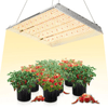 Mars TSW 2000 Quantum Board Led Grow Light - Everything But The Plant