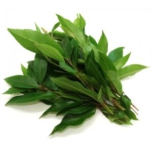 Herb - Lemon Myrtle Bnch