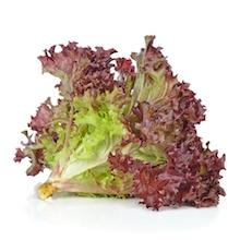 Lettuce- Red Coral Head