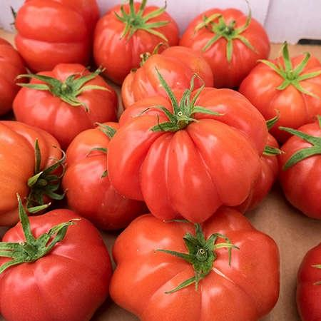 Tomatoes Oxheart Kg