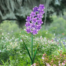 Solar Acrylic and Metal Purple Lilac Garden Stake, 5 by 34 Inches