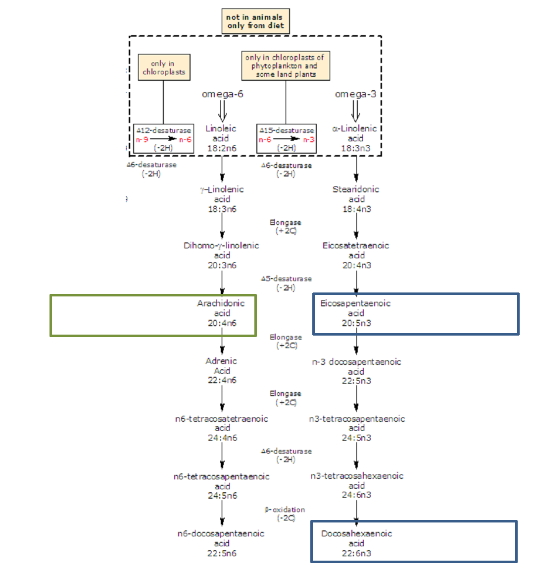 metabolic pathway of omega 3 and omega 6