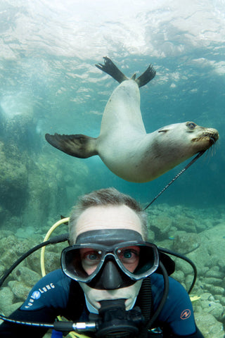 sealion pulling on man's SCUBA gear