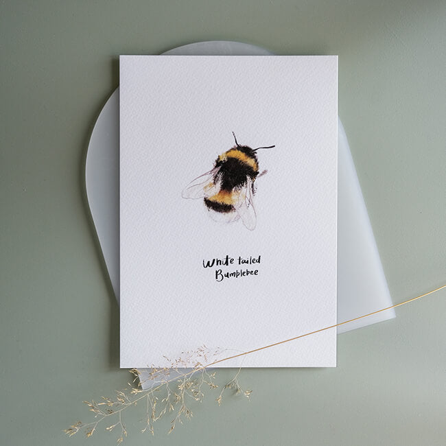 Small White-Tailed Bumblebee Print