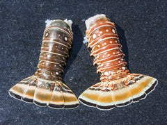Medium Spiny Lobster Tail