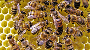 The queen's role in the hive