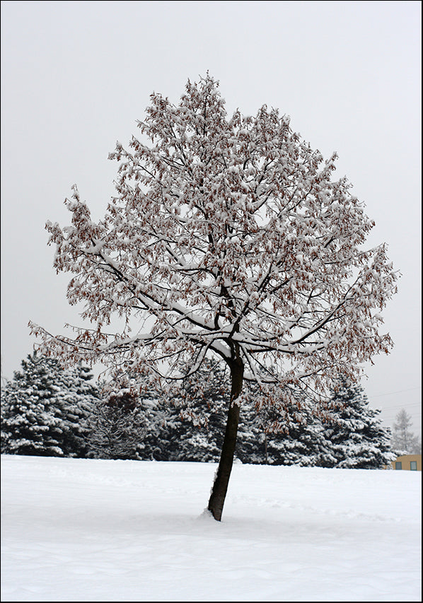 13197705 TREE AND SNOW , available in multiple sizes