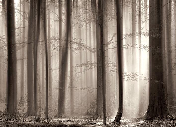 13690gg The Cloaking Woods, by Lars Van de Goor, available in multiple sizes