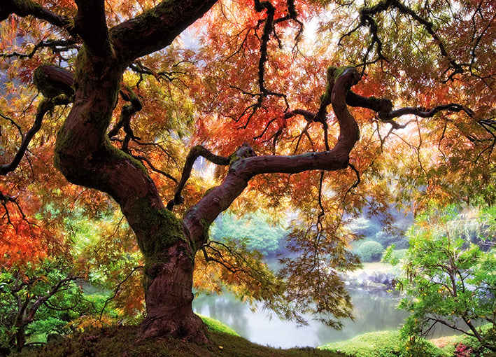 13704gg Dreaming of October, by Aaron Reed, available in multiple sizes