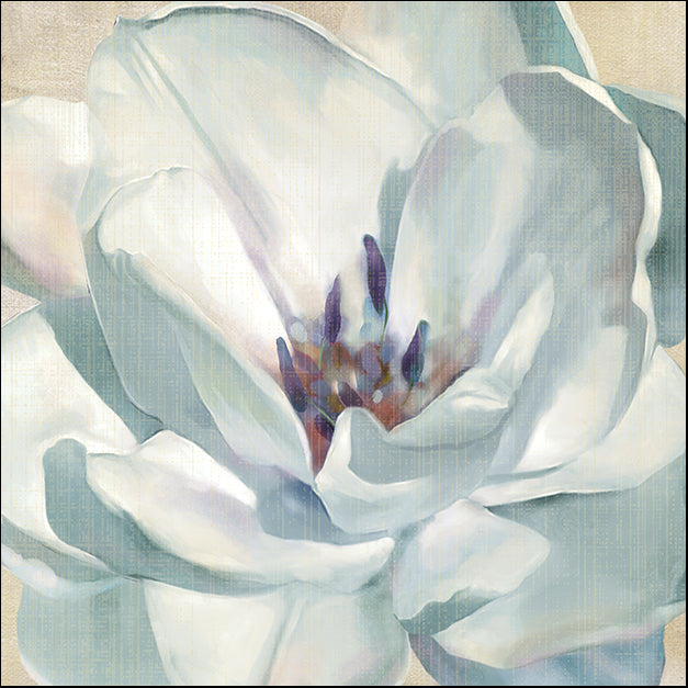 15659gg Iridescent Bloom II, by Carol Robinson, available in multiple sizes