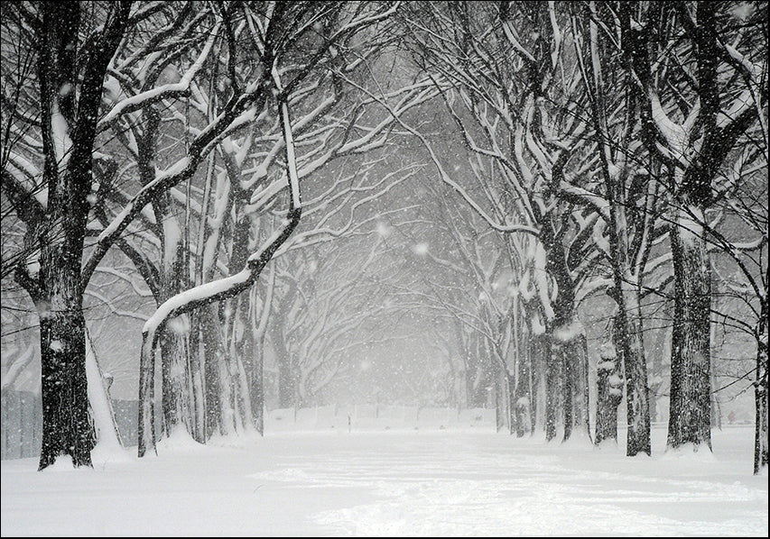 1647148 Tree path in the snow, available in multiple sizes