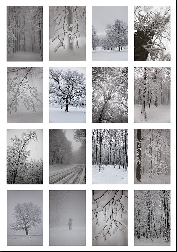 17372914 Snow covered trees montage , available in multiple sizes