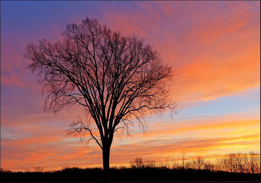 23201529 Tree Sunset, available in multiple sizes
