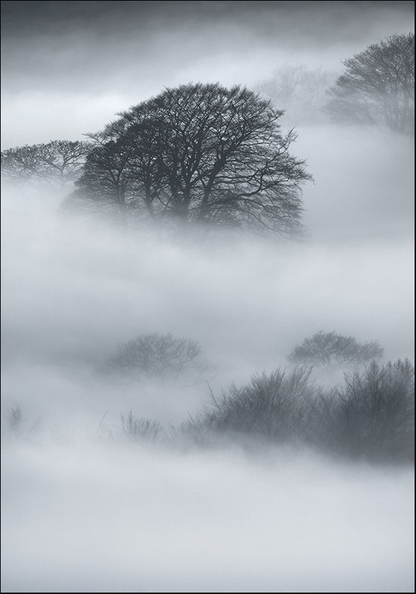 25237100 Trees in the Mist, available in multiple sizes