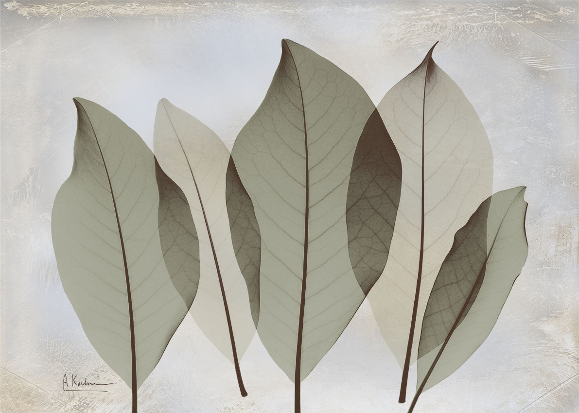 39658 MA Magnolia Leaf, available in multiple sizes