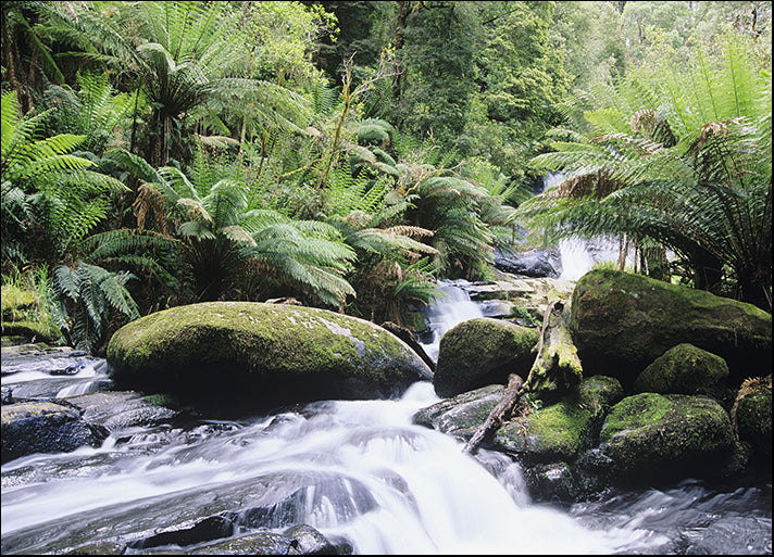 49204445 Australia Queensland stream in rainforest, available in multiple sizes