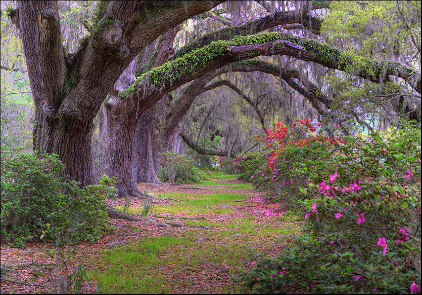 4942848 Tree arch, available in multiple sizes