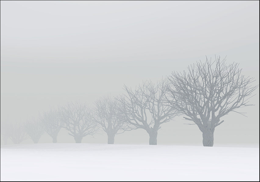 7120650 Trees, fog and snow, available in multiple sizes