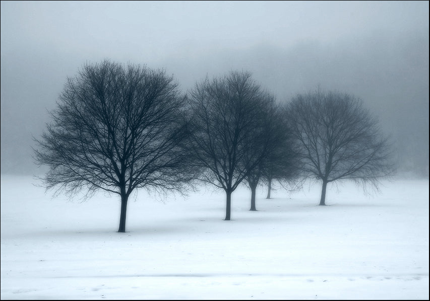 7243254 Trees, fog and snow, available in multiple sizes