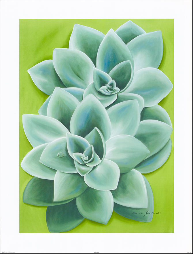 AAC ANS002 Succulents by Anita Siedlecki 61x80cm on paper