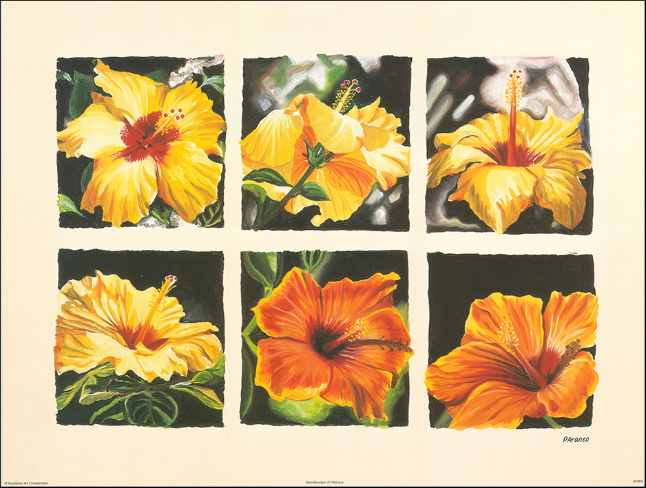 AAC AP005 Kaleidoscope of Hibiscus by Phyllis Araneo 60x45cm on paper