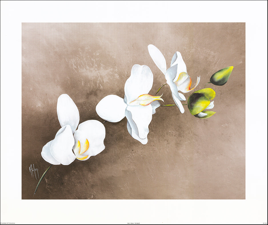 AAC KF076 Set in Stone - Orchids 2 by Karen Foley 76x63cm on paper