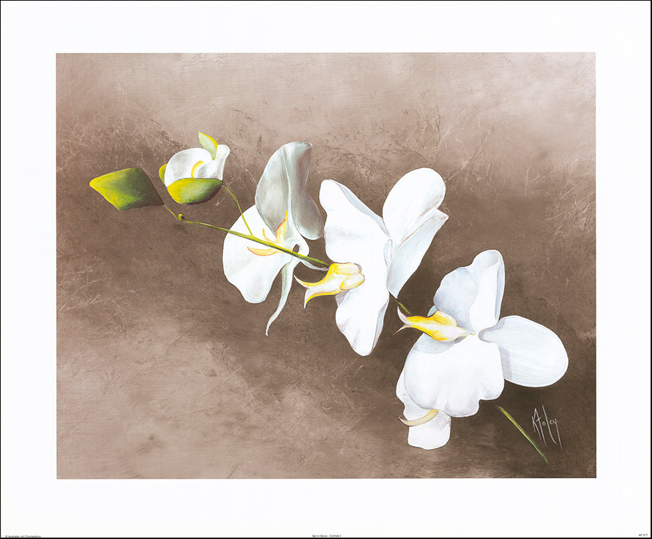 AAC KF077 Set in Stone - Orchids I by Karen Foley 76x63cm on paper