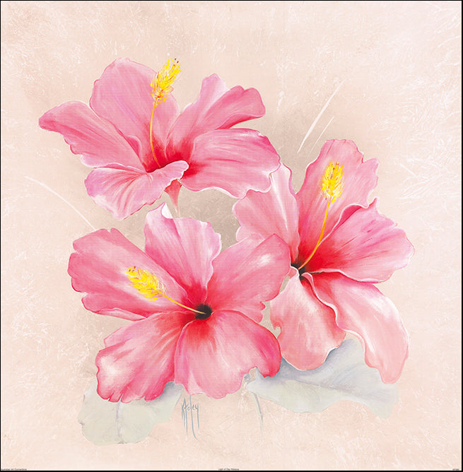 AAC KF080 Light of Day Hibiscus by Karen Foley multiple sizes on paper