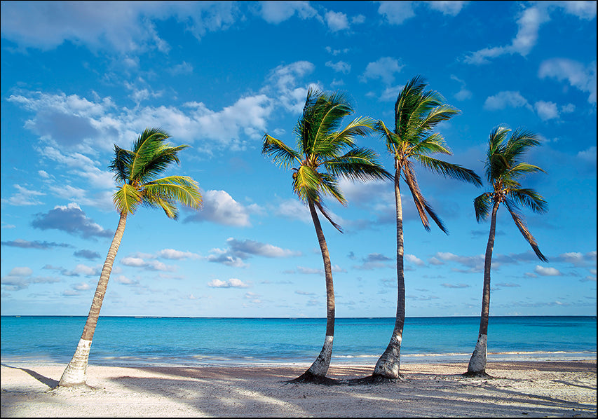 AADT83031051 Palm trees on the beach, available in multiple sizes