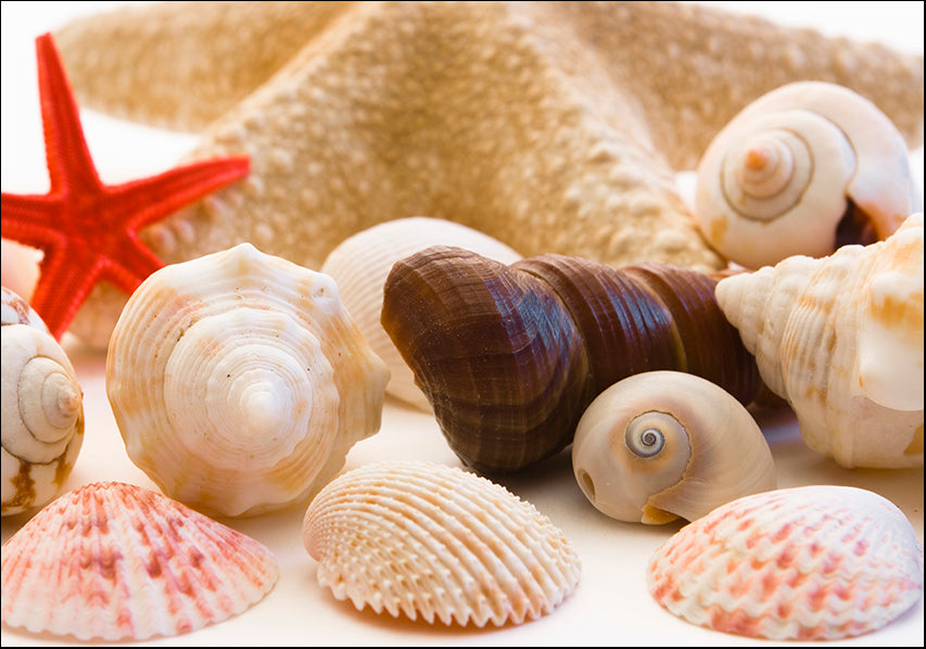 AADT83153145 Sea Shells, available in multiple sizes