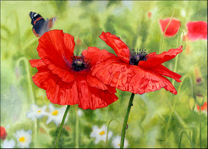 BILMAK78495 Poppies and Butterfly, by Bill Makinson, available in multiple sizes