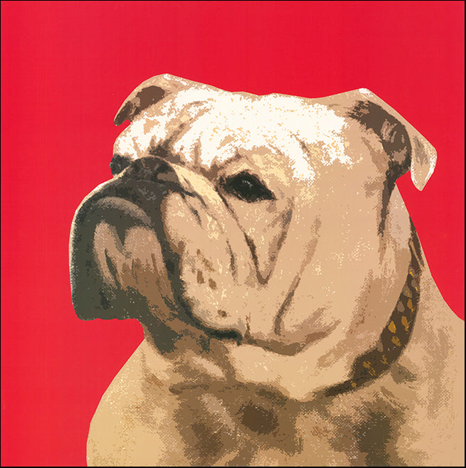 R SPV9290 The British Bulldog by The Vintage Collection 70x70cm on paper