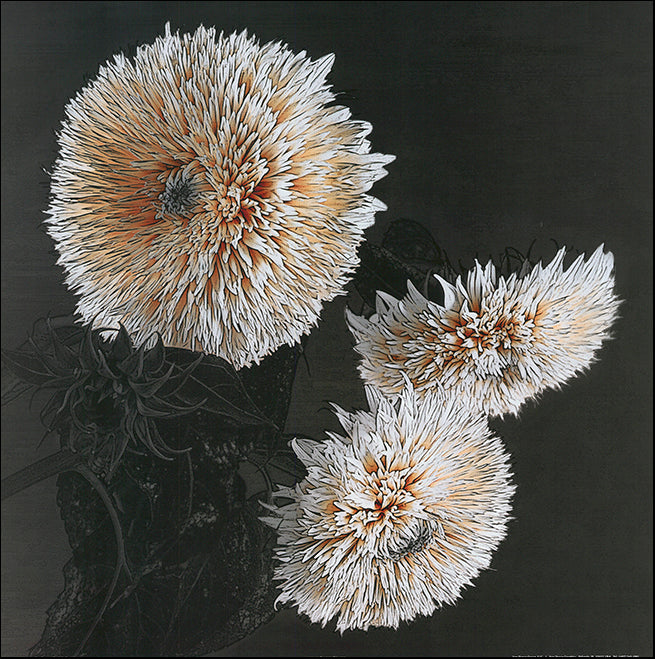 S 6717-20 Sunflowers 2 by Shelley Lake 50x50cm on paper