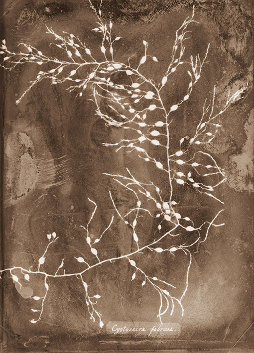 102227 Natural Forms Sepia 2, by THE Studio, available in multiple sizes