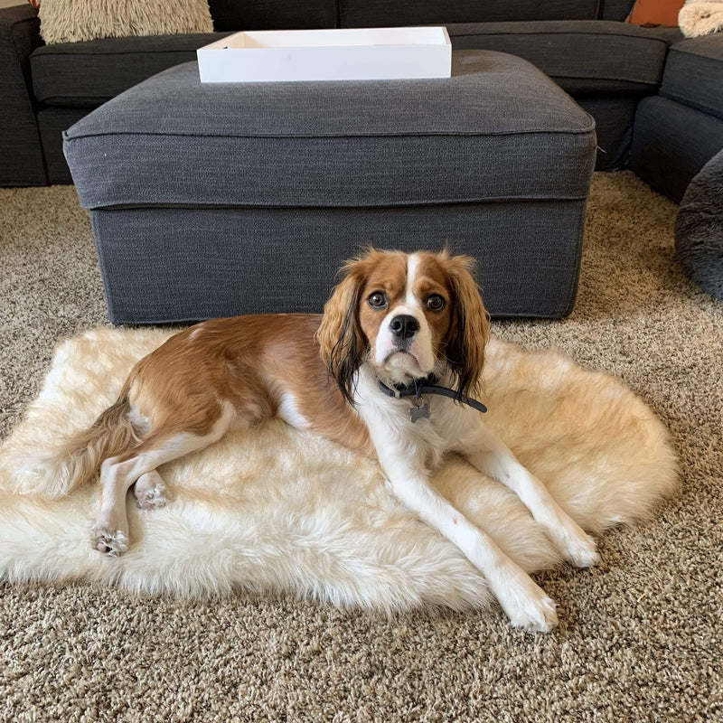 The Faux Fur Memory Foam Orthopedic Dog Bed Pet Cushion PupRug