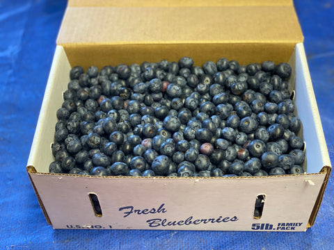 Blueberries 5lb box