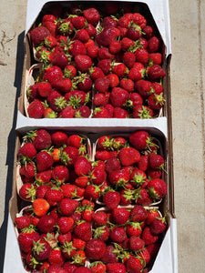 Michigan Strawberries - 8 Quart Flat